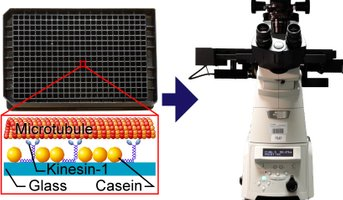 Collage illustrating experimental set-up for automated readout of motility assays in 384-well plates